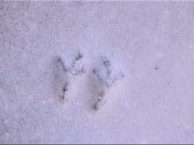 {snowy bird prints}