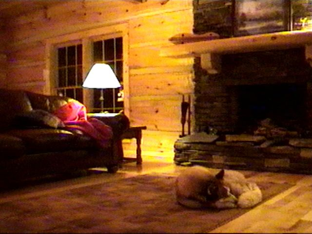 {timber asleep in living room}